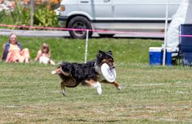 High Country Pet Fest